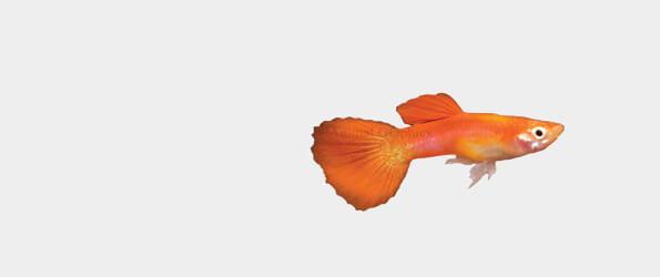 Žuvims